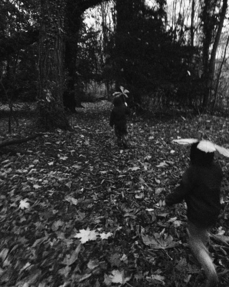 Art and Documentary Photography - Loading feuille-talisman_18765365269_o.jpg
