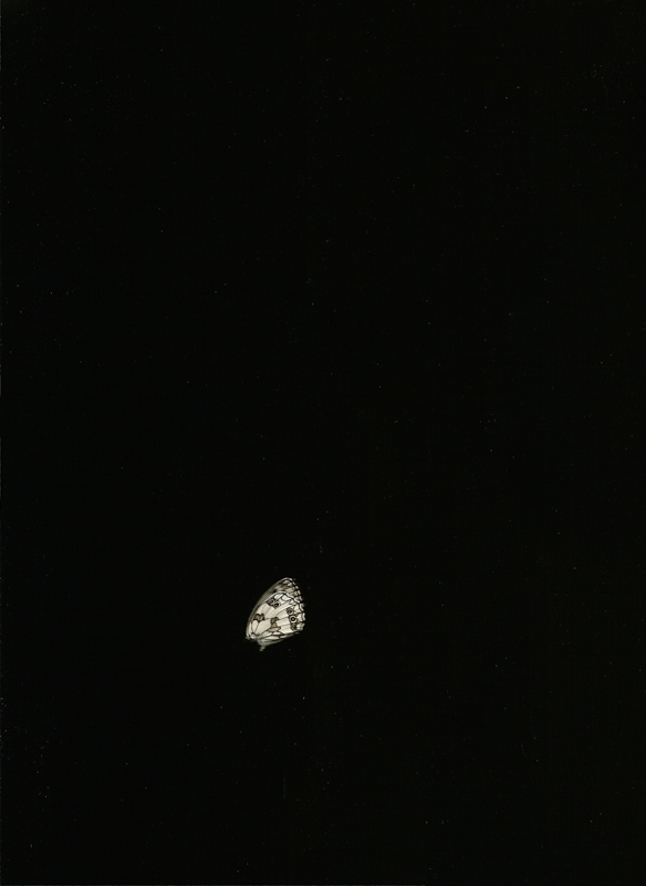Unique Digital Scan- Butterfly 2015