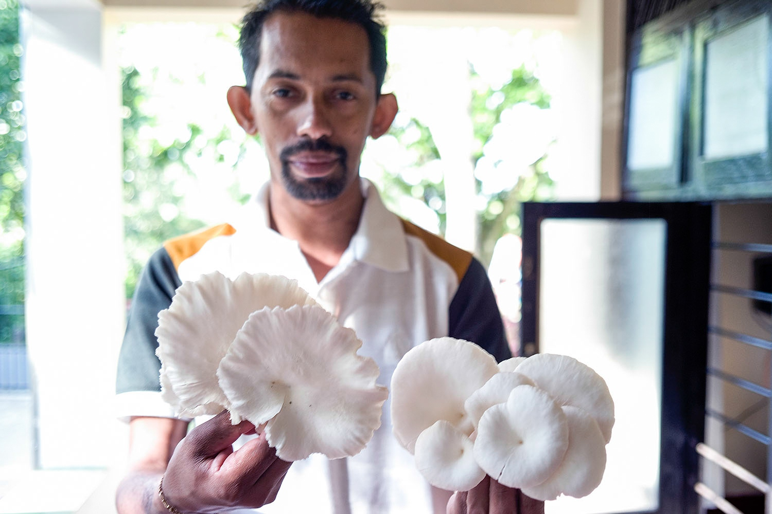 Priyantha Gunasinghe, the general manager of a community centre holds mushrooms that are grown in the garden shed, named The Mushroom Project. The charity run centre provides support to isolated communities by giving them the training to grow their own food.