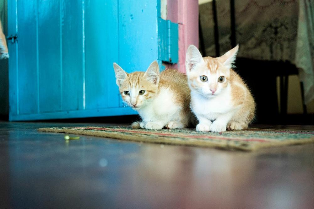 Pet cats at a community centre.