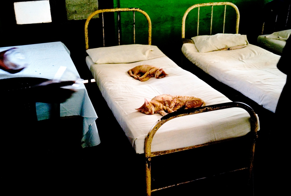 Stray cats sleep on the patient's beds. There are still funding problems for the hospital and conditions could still be improved. There are many dedicated people who have been constantly campaigning for the welfare of the women at the hospital since 1984.