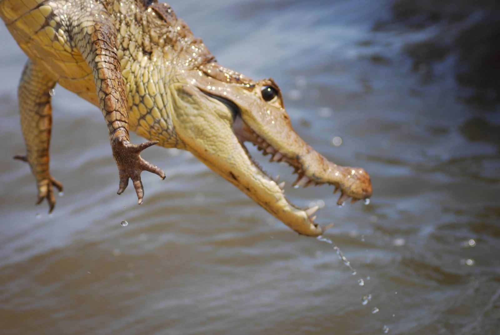 Art and Documentary Photography - Loading 2012-11 Alligator-2-2.jpg