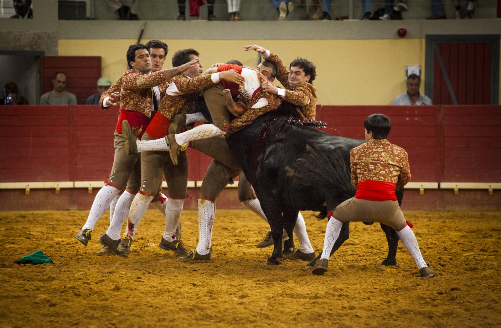 Forcado leads the bull after the face catch and is helped by the rest of the group. The forcado must be kept in the head of the bull until he stops, otherwise he has to performe another face catch. The reunion is the second part during the Forcados performance.