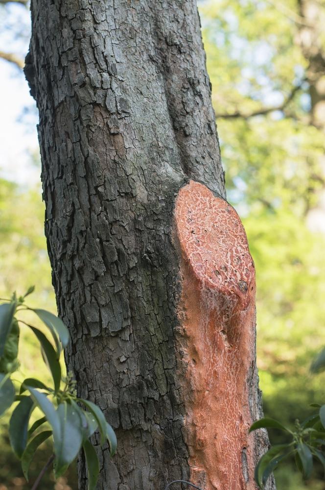 Art and Documentary Photography - Loading 9_Bleeding_Tree_1WS.jpg