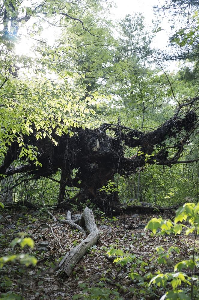 Art and Documentary Photography - Loading 13_Crow_Tree_2_2.jpg