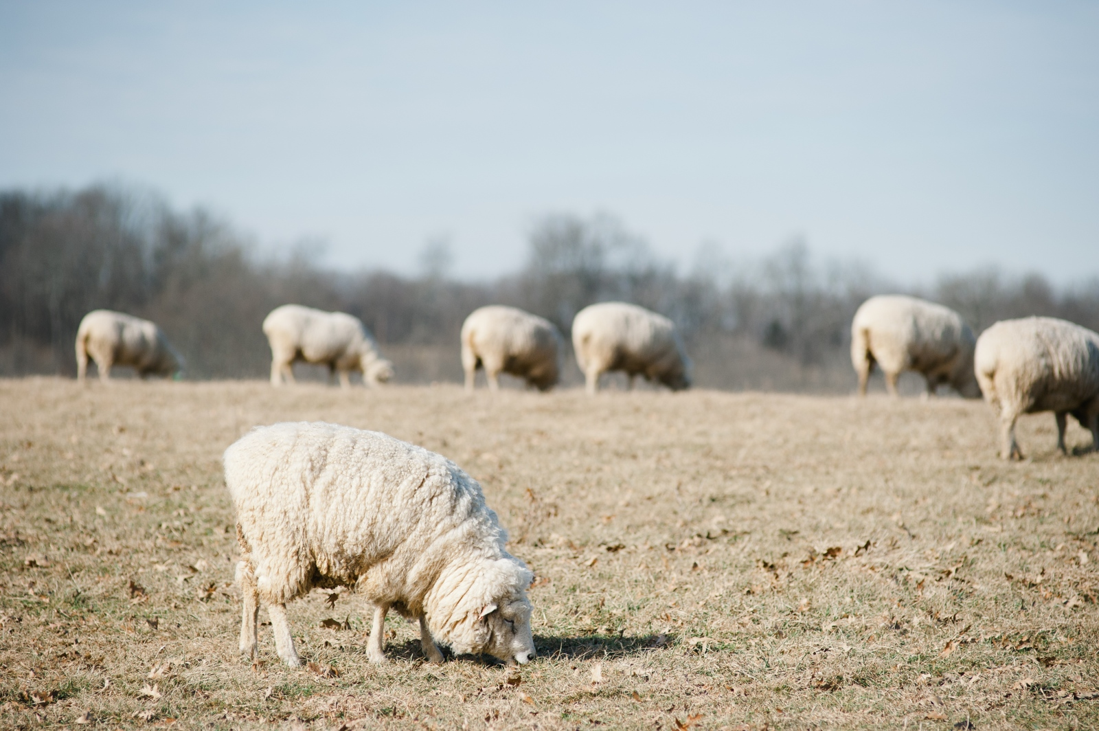 Art and Documentary Photography - Loading Kathy_sheep_farm_byMeg-15.jpg
