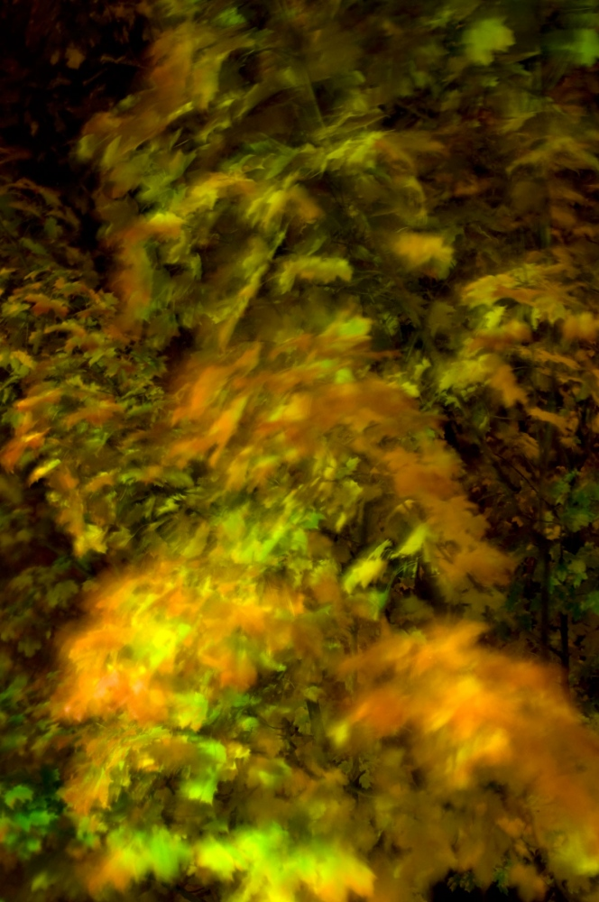 Art and Documentary Photography - Loading autumn-leaves-in-motion.jpg