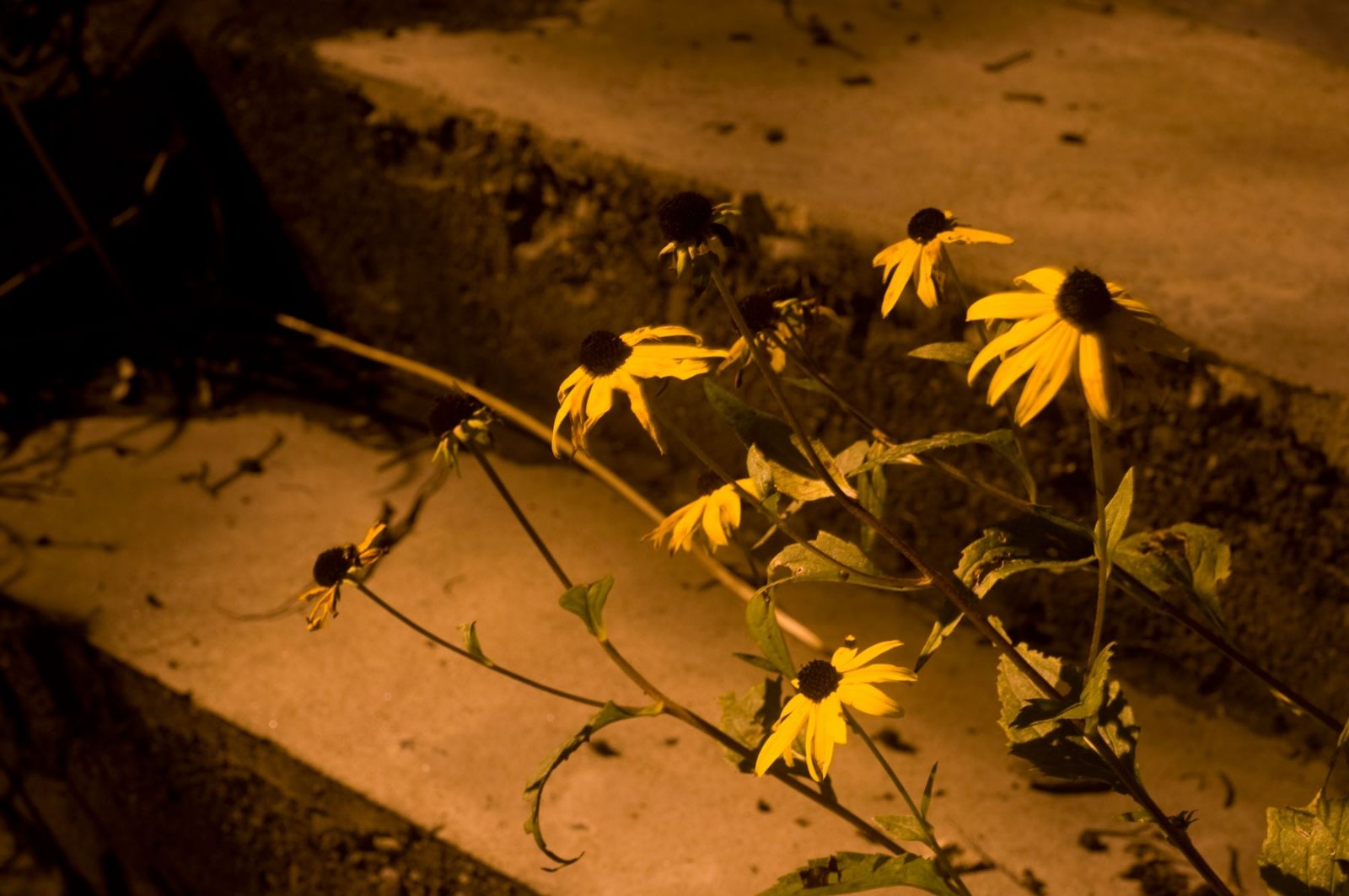 Art and Documentary Photography - Loading flowers-at-night.jpg