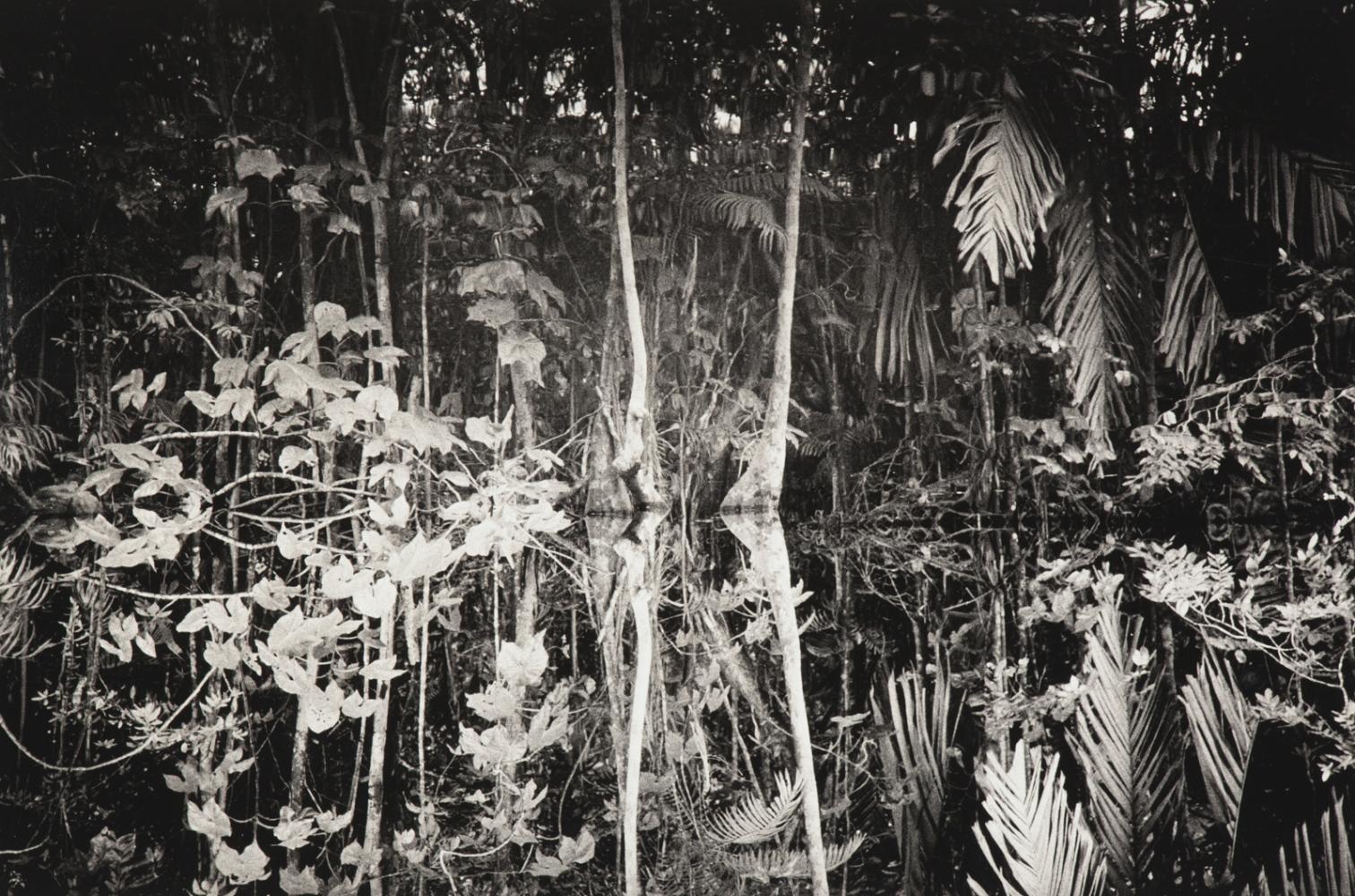 Art and Documentary Photography - Loading WEB_Waniku_AndreaSantolaya-8.jpg