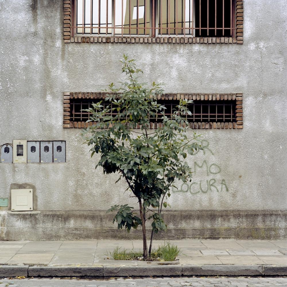 Art and Documentary Photography - Loading TreePortraits1.jpg