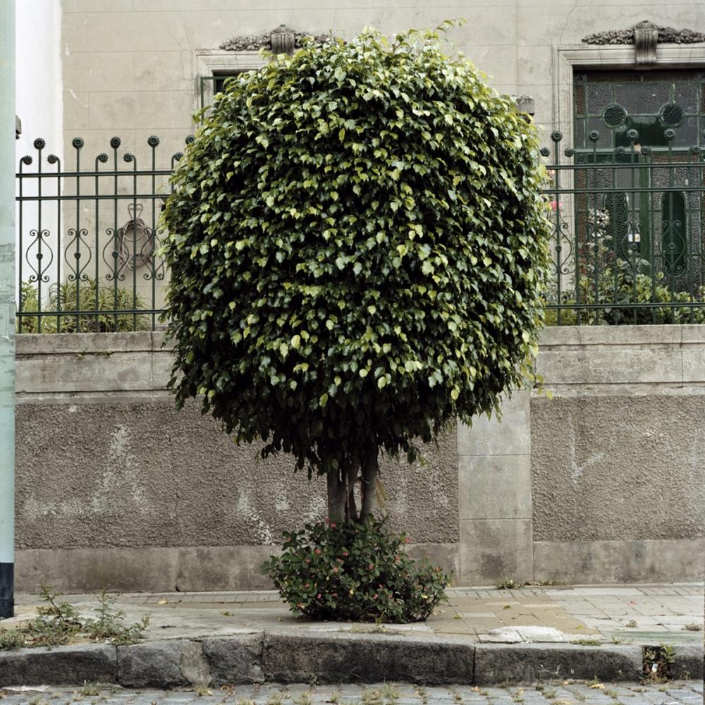 Art and Documentary Photography - Loading TreePortraits2.jpg