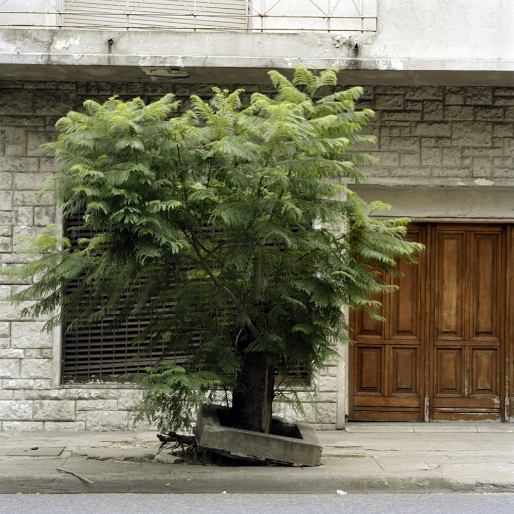 Art and Documentary Photography - Loading TreePortraits7.jpg