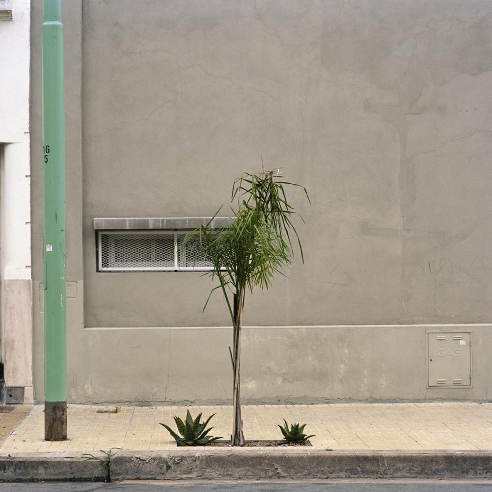 Art and Documentary Photography - Loading TreePortraits9.jpg