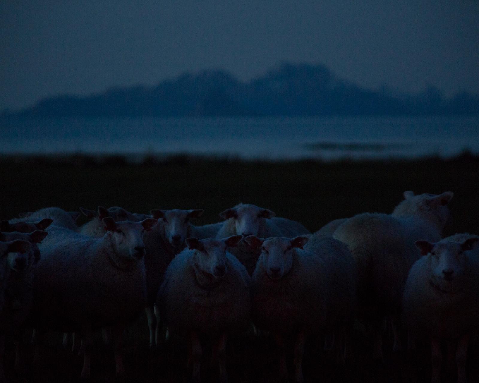 Art and Documentary Photography - Loading acacia_johnson_14.jpg