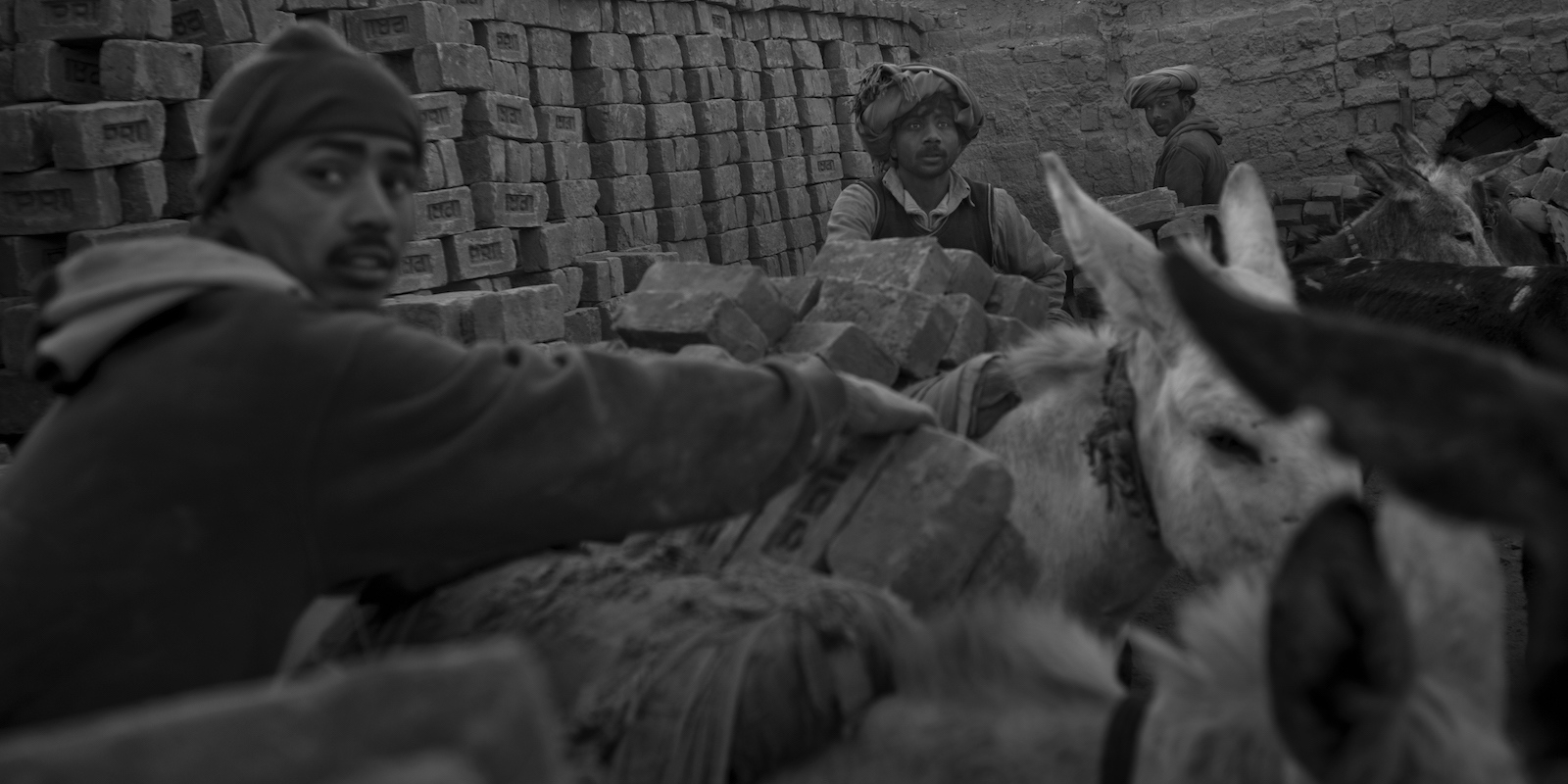 Pakistani labourers move bricks onto donkeys to transport them from a brick factory on the outskirts of Islamabad on January 11, 2012.