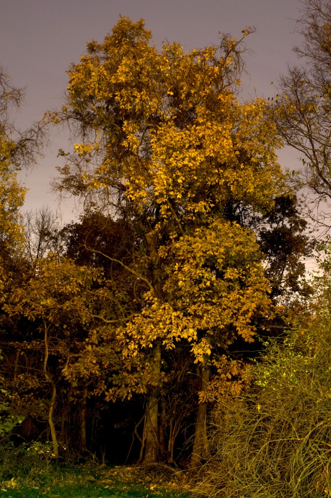 Art and Documentary Photography - Loading autumn-colors-at-night.jpg