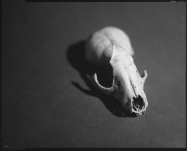 Art and Documentary Photography - Loading Skull_front__8.28.15.jpg