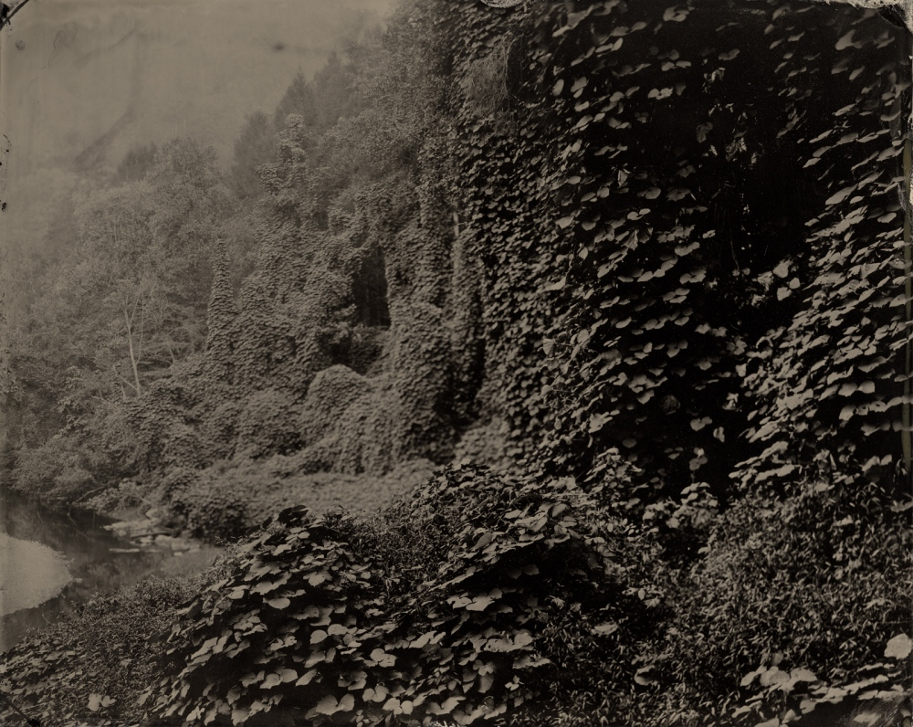 Kudzu, Dead End Road, Cornettsville, Kentucky, 2015