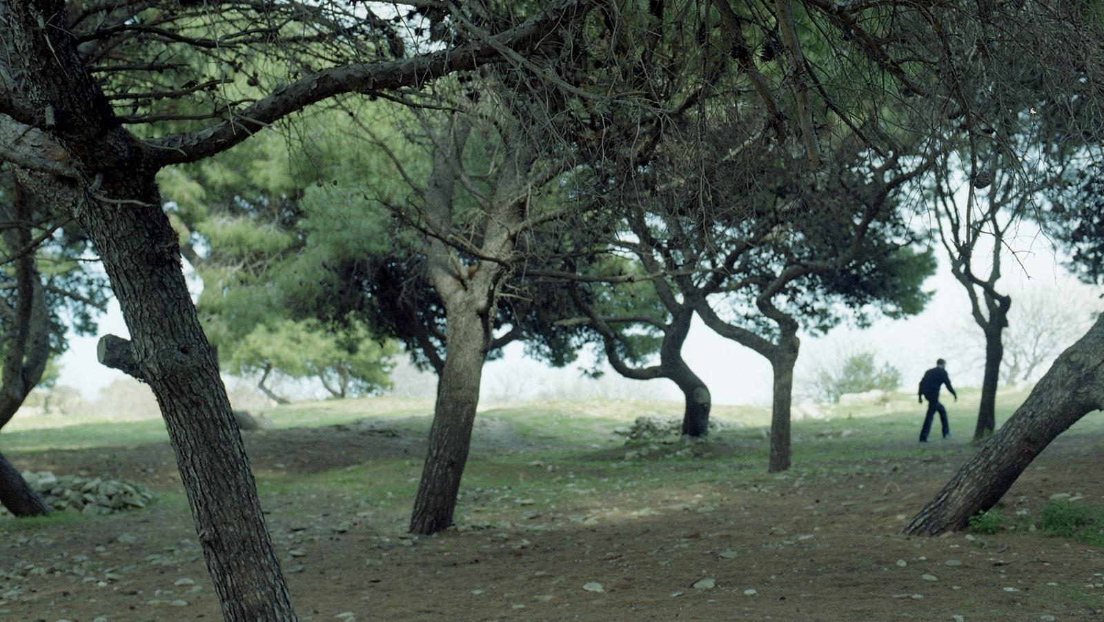 Valletta Gardens, 2013