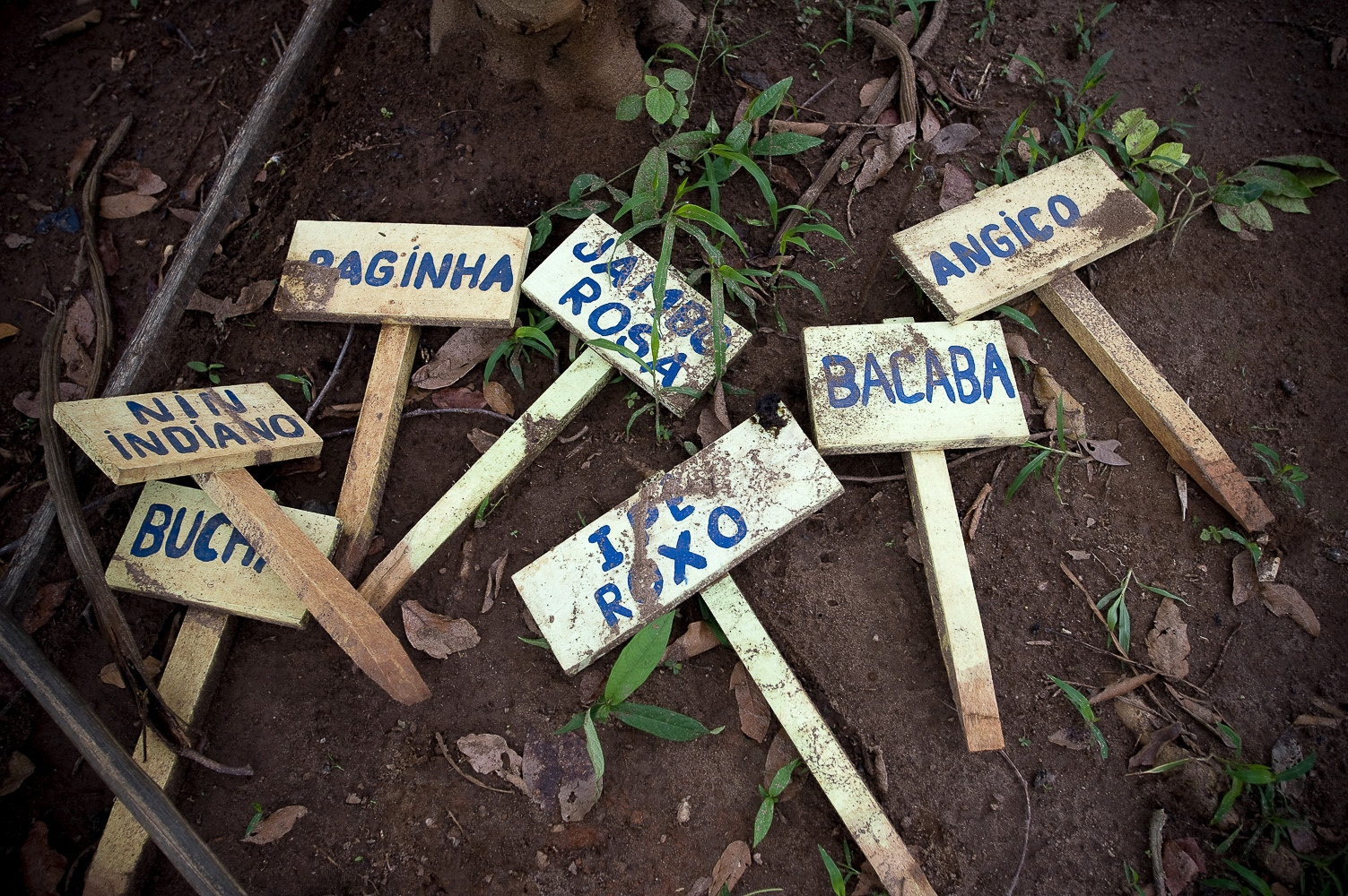 "Signs to be used to identify new trees being brought on by the Surui for later planting in the Rainforest at the ""7th September Indian Reserve"" Rondonia, Brazil. The 50 year plan that the Surui have devised themselves is to plant a million trees and return their land to its pristine condition."
