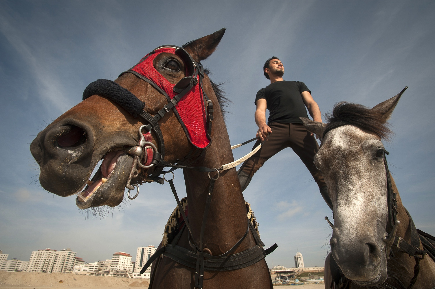 The Horsemen of Gaza. Abdulla al Ghefari : 'Horses are my life, job, passion.'