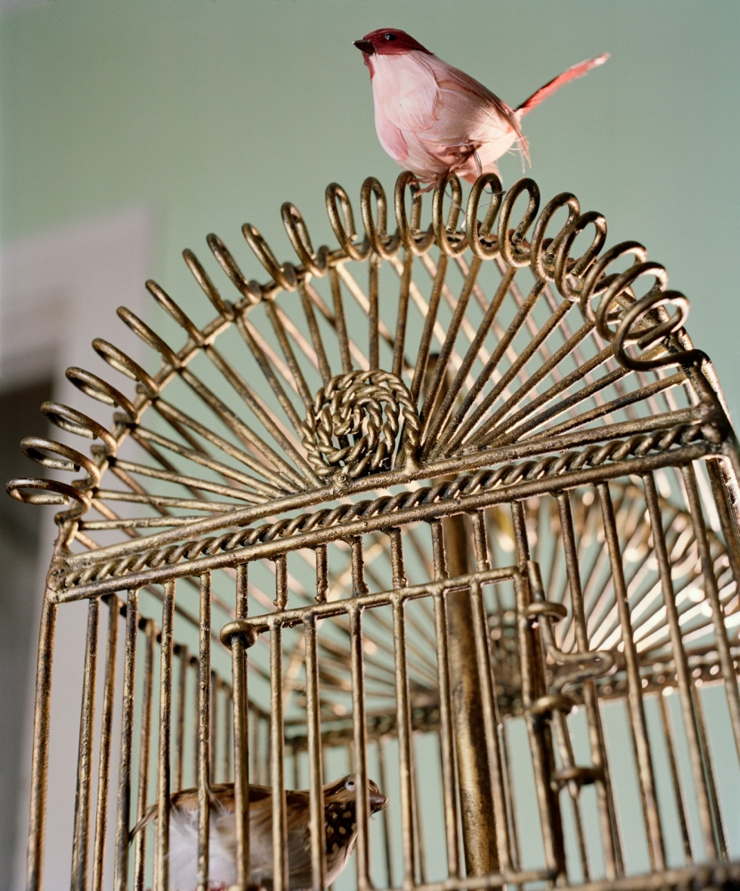 Art and Documentary Photography - Loading Caged_Birds.jpg