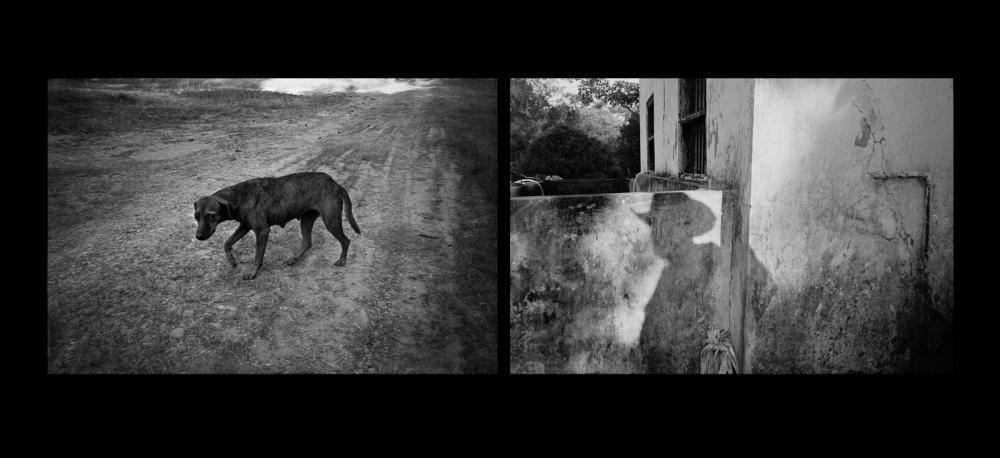 El Perro y La Sombra, Ozuluama, Veracruz 2010 ©Sylvia de Swaan