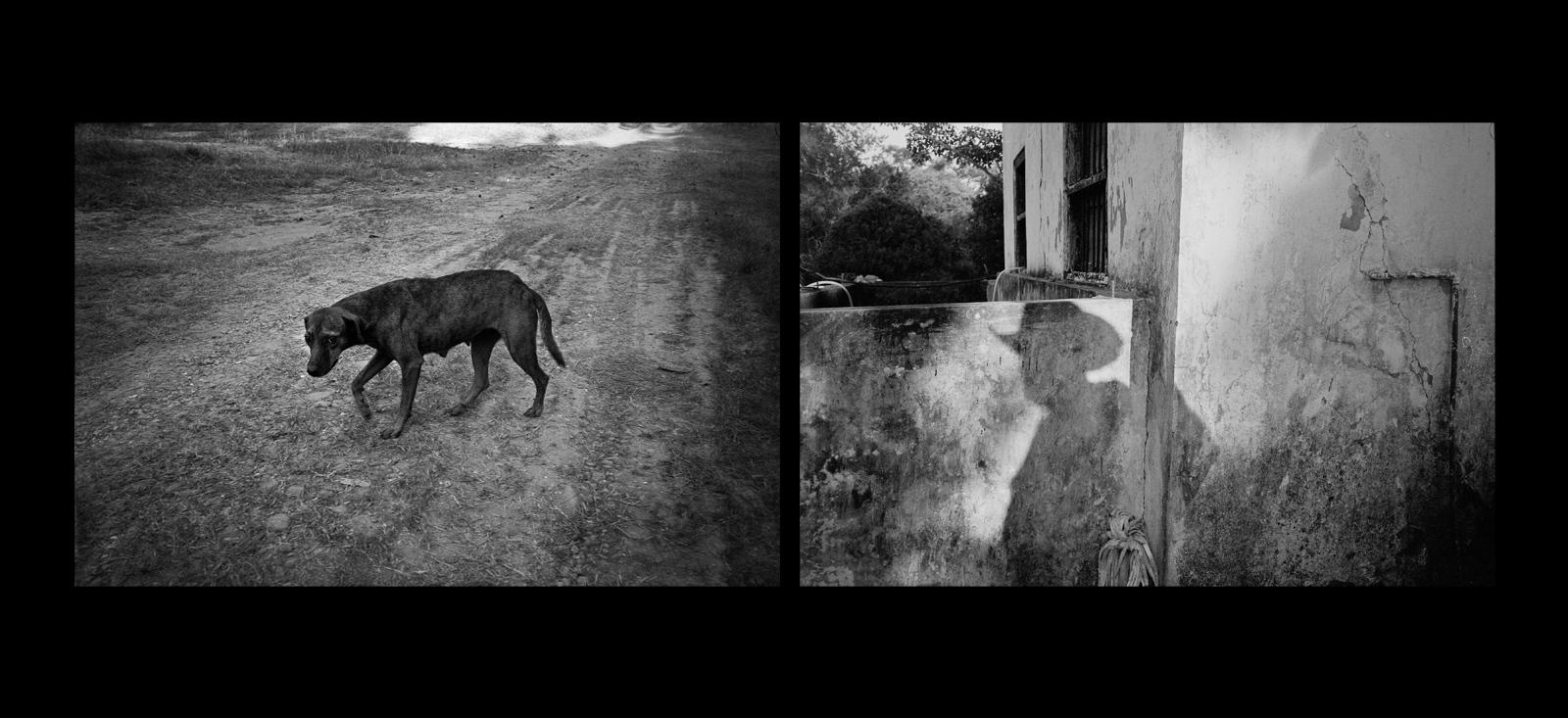 Art and Documentary Photography - Loading El_Perro_y_La_Sombra__sdeswaan.jpg