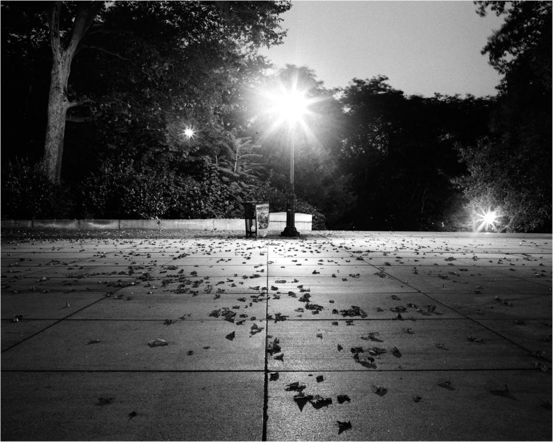 Fallen Leaves (Grant's Park) August 2002