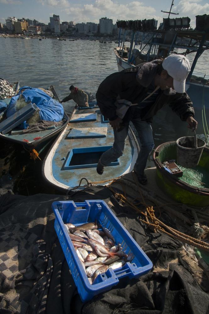 The days catch at Gaza Port, Gaza City