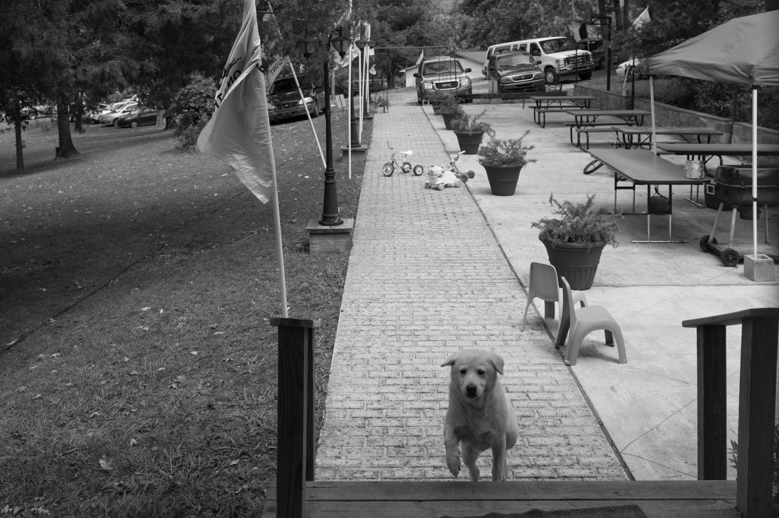 """Zinc, Arkansas.Thomas Robb's dog """"White Dog,"""" coming up the steps at the Knights Party of the KKK's church compound."""