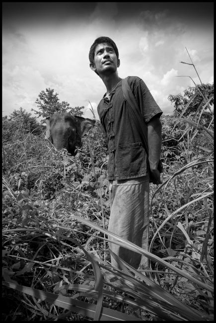 Mahout Nen with elephant Pang Dow at Boon Lotts Elephant Sanctuary, Baan Na Ton Jan, Tambon Baan Tuck, Si Satchanalai, Sukhothai, Thailand.