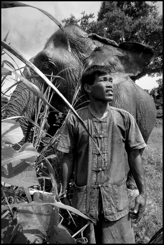 "Mahout Loy with his elephant Wassana. ""They Can't speak to me but some how they understand me."" at Boon Lotts Elephant Sanctuary, Baan Na Ton Jan, Tambon Baan Tuck, Si Satchanalai, Sukhothai, Thailand. Wassana: (Fortune) Had half his foot blown away by a land mine while logging on Thai Burmese border. Loy is one of a handfull of Mahouts who are leading the way in Elephant Welfare."