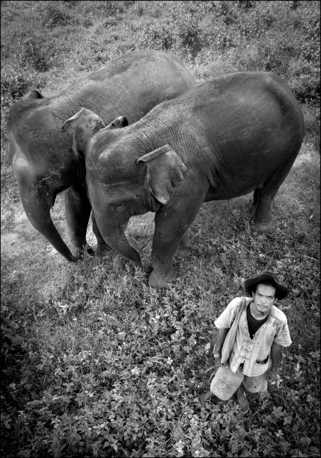 Mahout San with elephants Tong Yui and Bong Beng at Boon Lotts Elephant Sanctuary, Baan Na Ton Jan, Tambon Baan Tuck, Si Satchanalai, Sukhothai, Thailand.
