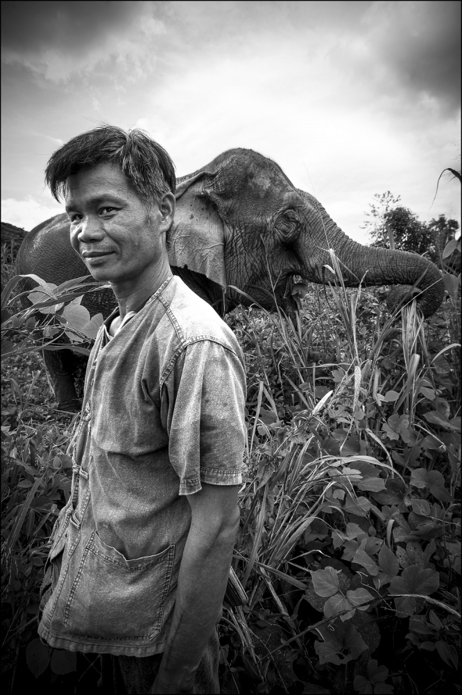 Mahout Som Chai with his elephant Pang Noi (Little Miss) at Boon Lotts Elephant Sanctuary, Baan Na Ton Jan, Tambon Baan Tuck, Si Satchanalai, Sukhothai, Thailand. Som Chai is one of the handfull of Mahouts at BLES who are leading the way in Elephant welfare.  No demeaning elephant rides or shows are alowed at BLES and the Mahouts care for their animals with positive reinforcement, no use of the ankus (elephant hook) for control.  The elephants are left to be simply elephants to roam the charities forest grounds.
