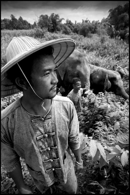 Mahouts Don & Lor with Pang Tong & Mee Chok at Boon Lotts Elephant Sanctuary, Baan Na Ton Jan, Tambon Baan Tuck, Si Satchanalai, Sukhothai, Thailand.