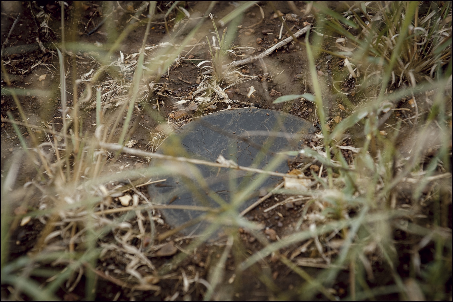 A Russian Federation PMN Anti Peesonnel Blast Mine detected by HALO deminers at Mubobo minefield, Maputo Province, Mozambique. Laid some 30 years ago the mine's still remain active it was later destroyed with a Pentolite charge.