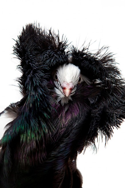Art and Documentary Photography - Loading Pigeon_Degner_01.jpg