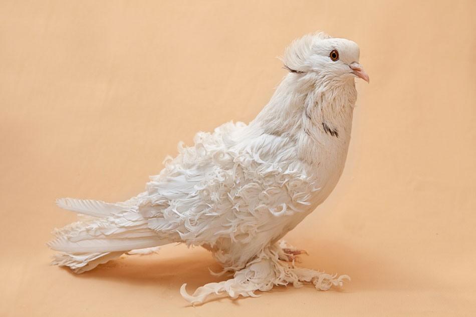 Art and Documentary Photography - Loading Pigeon_Degner_06.jpg