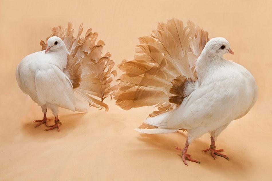 Art and Documentary Photography - Loading Pigeon_Degner_08.jpg