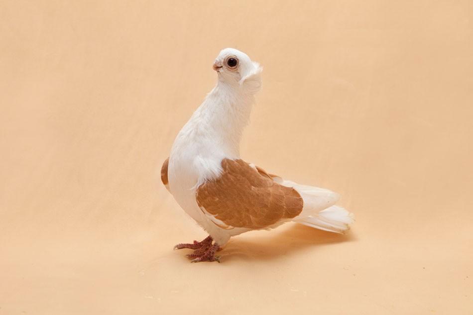 Art and Documentary Photography - Loading Pigeon_Degner_02.jpg