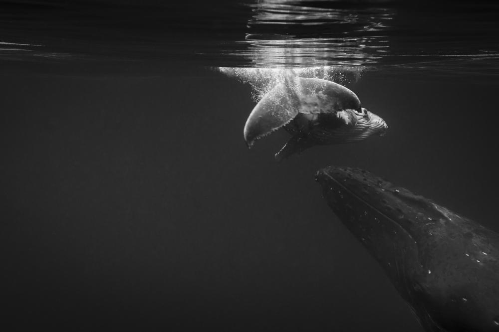 Photography image - Loading JavierDelgado_Lift-me-up-2_Oceans.jpg