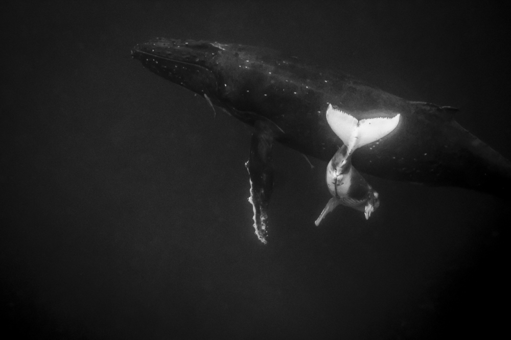 Photography image - Loading JavierDelgado_Back-to-Mother_Oceans.jpg