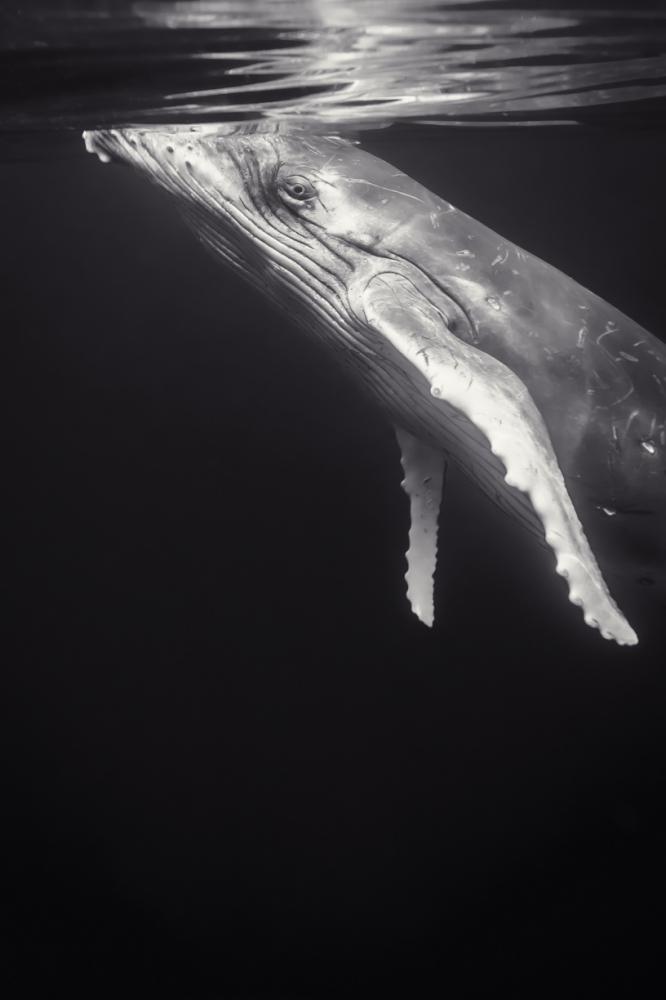 Art and Documentary Photography - Loading JavierDelgado_Eye-to-eye-contact_Oceans.jpg