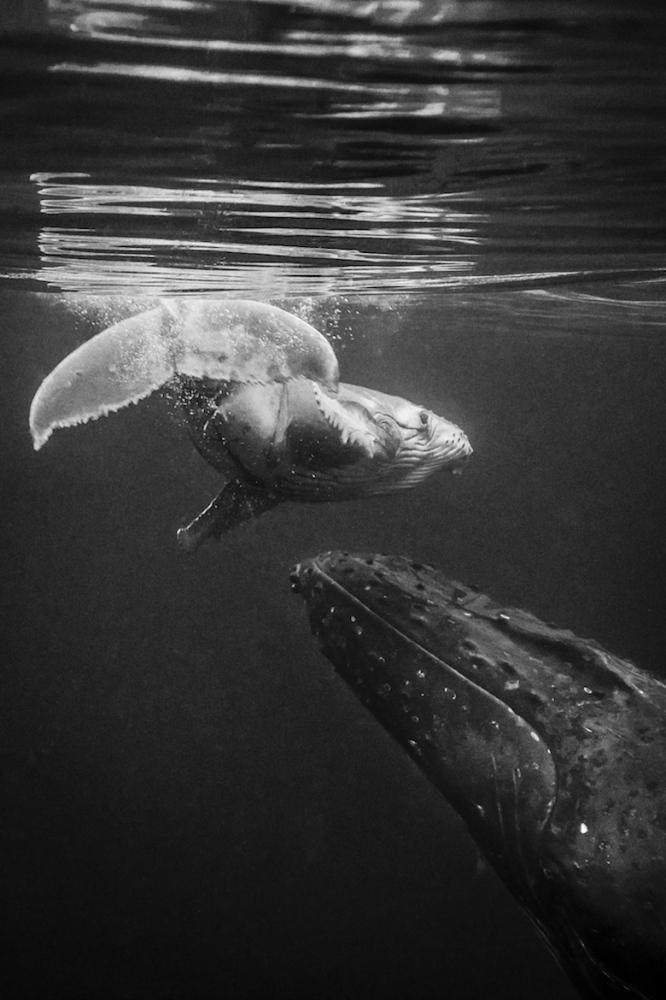 Art and Documentary Photography - Loading JavierDelgado_Lift-me-up_Oceans.jpg
