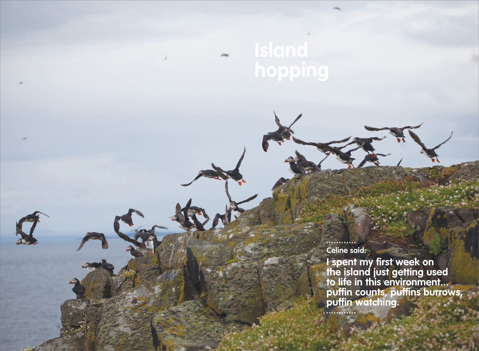 Art and Documentary Photography - Loading BIRD_2.jpg