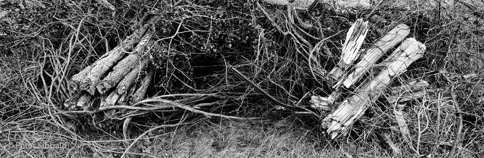 Art and Documentary Photography - Loading 023-circa-2007_spr_041_11-crushed_hedgerow-posts-copy.jpg