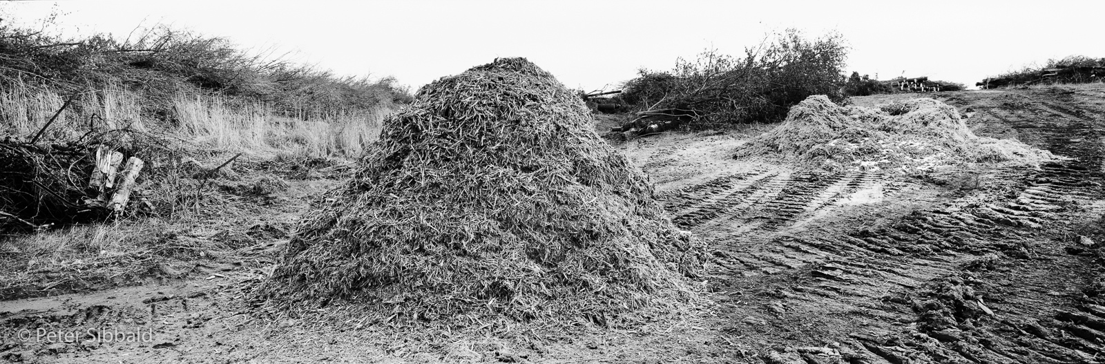 Art and Documentary Photography - Loading 024-circa-2007_spr_039_08_woodchip_pile-copy.jpg