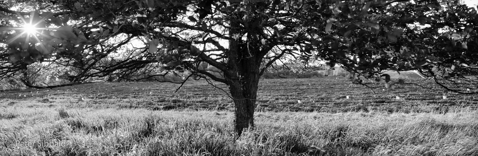 Art and Documentary Photography - Loading 033-2006_spr_054_2.jpg
