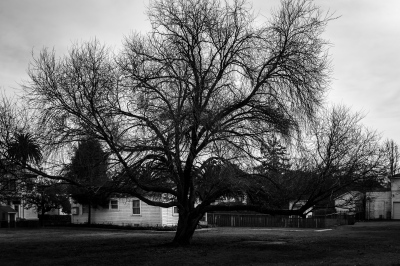 Trees and White Houses, Mare Island, Ca